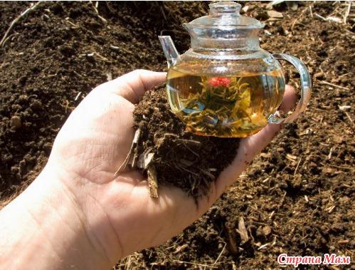 Как сделать акч компостный чай